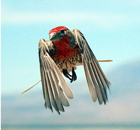 How To Make Birds Fly Good - Syncing a videos frame rate with a birds wings does something amazing